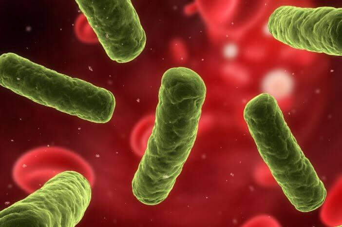 5 Pengobatan untuk Menangani Bakteremia