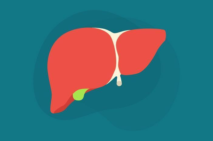 Inilah Fakta-Fakta Menarik Mengenai Liver