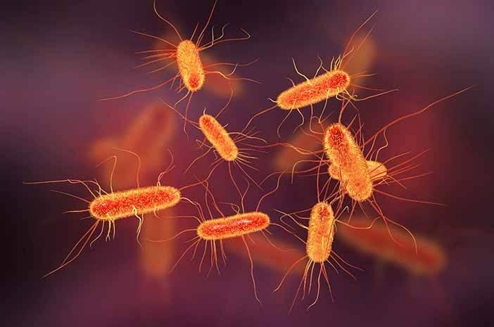 Ini 4 Cara Mencegah Kontaminasi Bakteri E. Coli pada Makanan