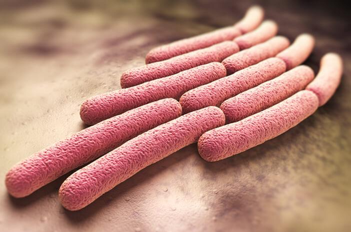infeksi shigella