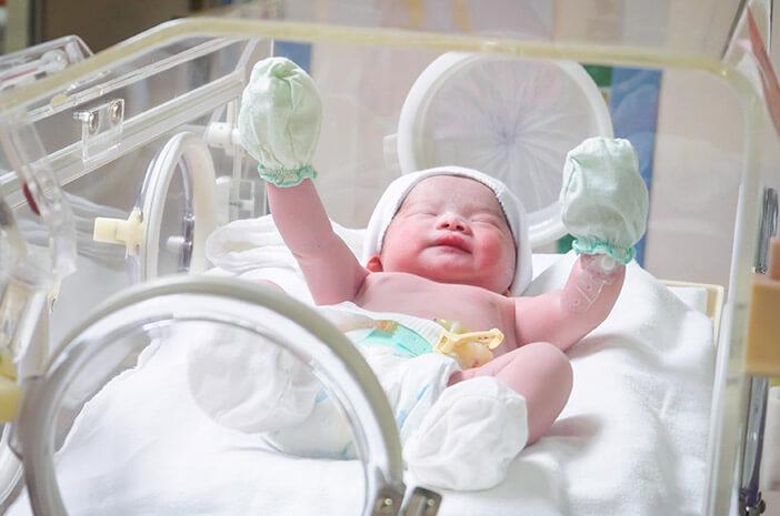 Proses Penentuan Jenis Kelamin Bayi Lewat Program Bayi Tabung