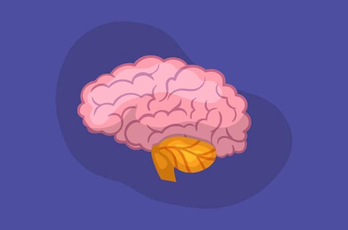 Cedera Kepala Bisa Picu Abses Otak, Ini Alasannya