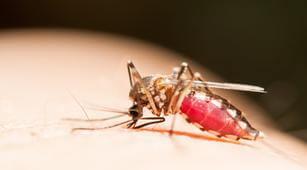 Gaya Hidup Sehat untuk Mencegah Penyebaran Chikungunya