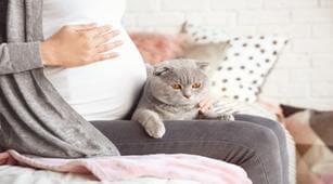 Kehamilan, bahaya bulu kucing