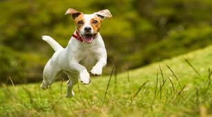 Hati-Hati Jilatan Anjing yang Bisa Sebabkan Selulitis