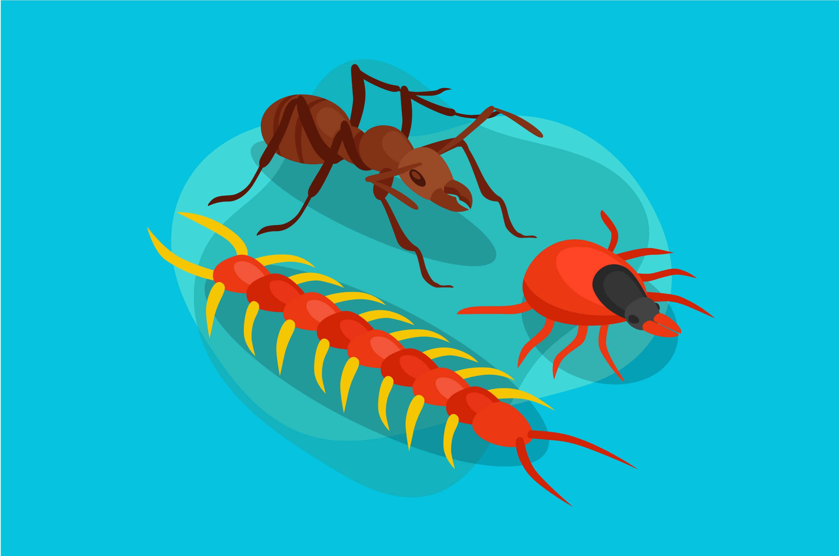 Inilah Reaksi Tubuh Ketika Terkena Gigitan Serangga