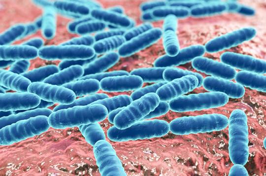 Kecil tetapi Berbahaya, Inilah 5 Penyakit yang Disebabkan Bakteri