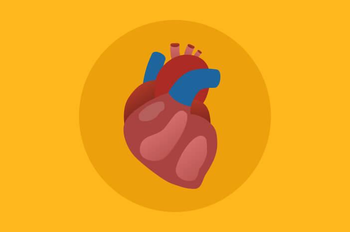 Kenali Lebih Dalam Bagian Jantung dan Fungsinya