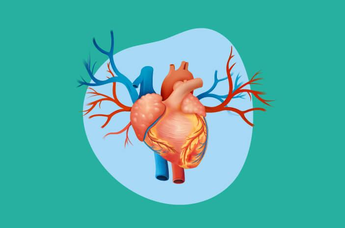Ketahui Fungsi Jantung Ini pada Tubuh Manusia