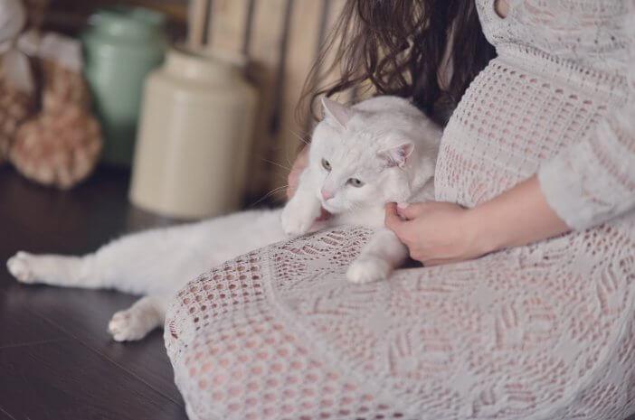 Main Kucing Saat Hamil, Berisiko Terkena Toksoplasmosis?