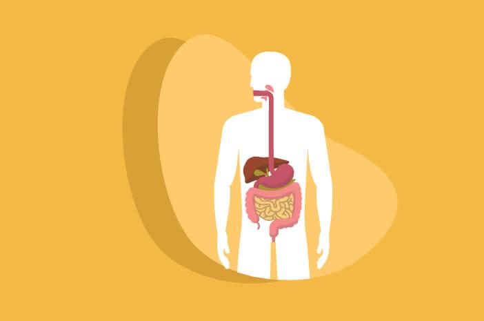 Organ Tubuh Ini Istirahat Selama Puasa
