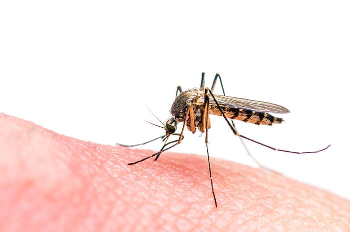 Pengaruhi Pertumbuhan, Virus Zika Juga Bisa Ganggu Pendengaran