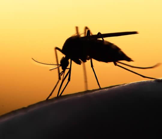 Waspada, Ternyata Virus Zika Bisa Memicu Mikrosefali