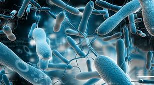 Waspada, Kenali Bakteri Penyebab Kolera