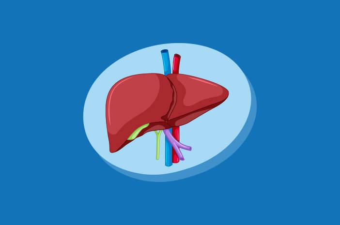 5 Makanan yang Baik untuk Kesehatan Liver