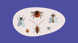 7 Makanan yang Dapat Mencegah Gigitan Serangga